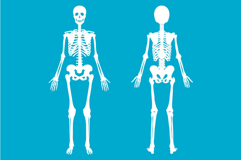 Musculoskeletal (MSK)